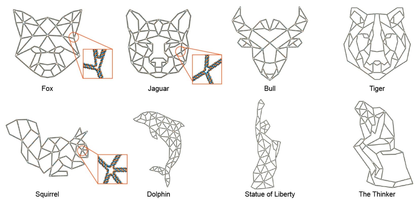 PERDIX: алгоритм автоматического проектирования ДНК-оригами разной геометрии - 1