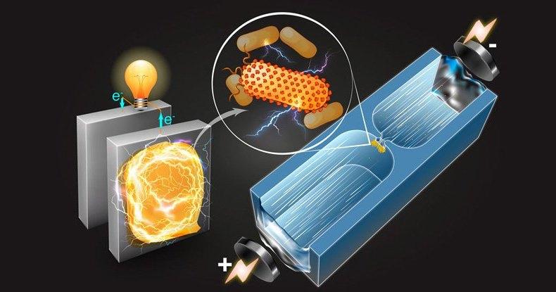 Электричество бактерий можно использовать для заряда батарей