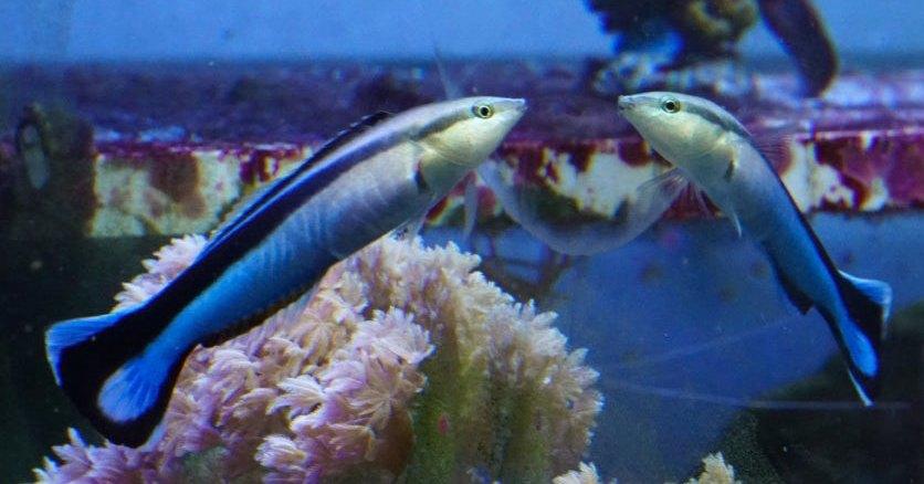 Рыбы впервые прошли зеркальный тест