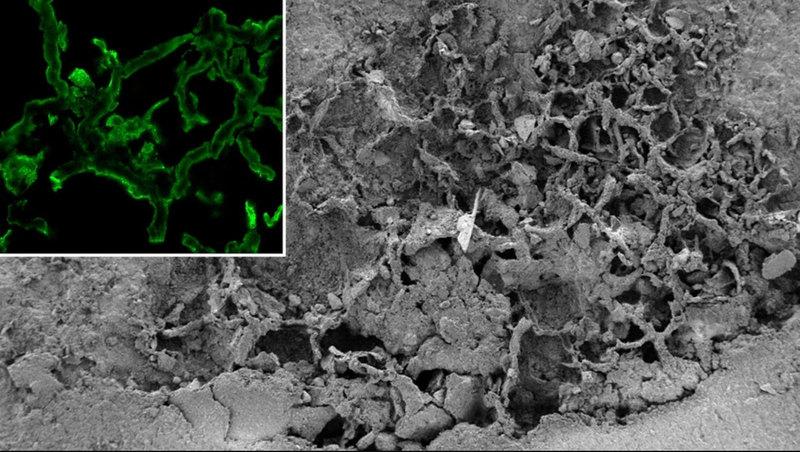 Найден древний гриб возрастом 715-810 млн лет