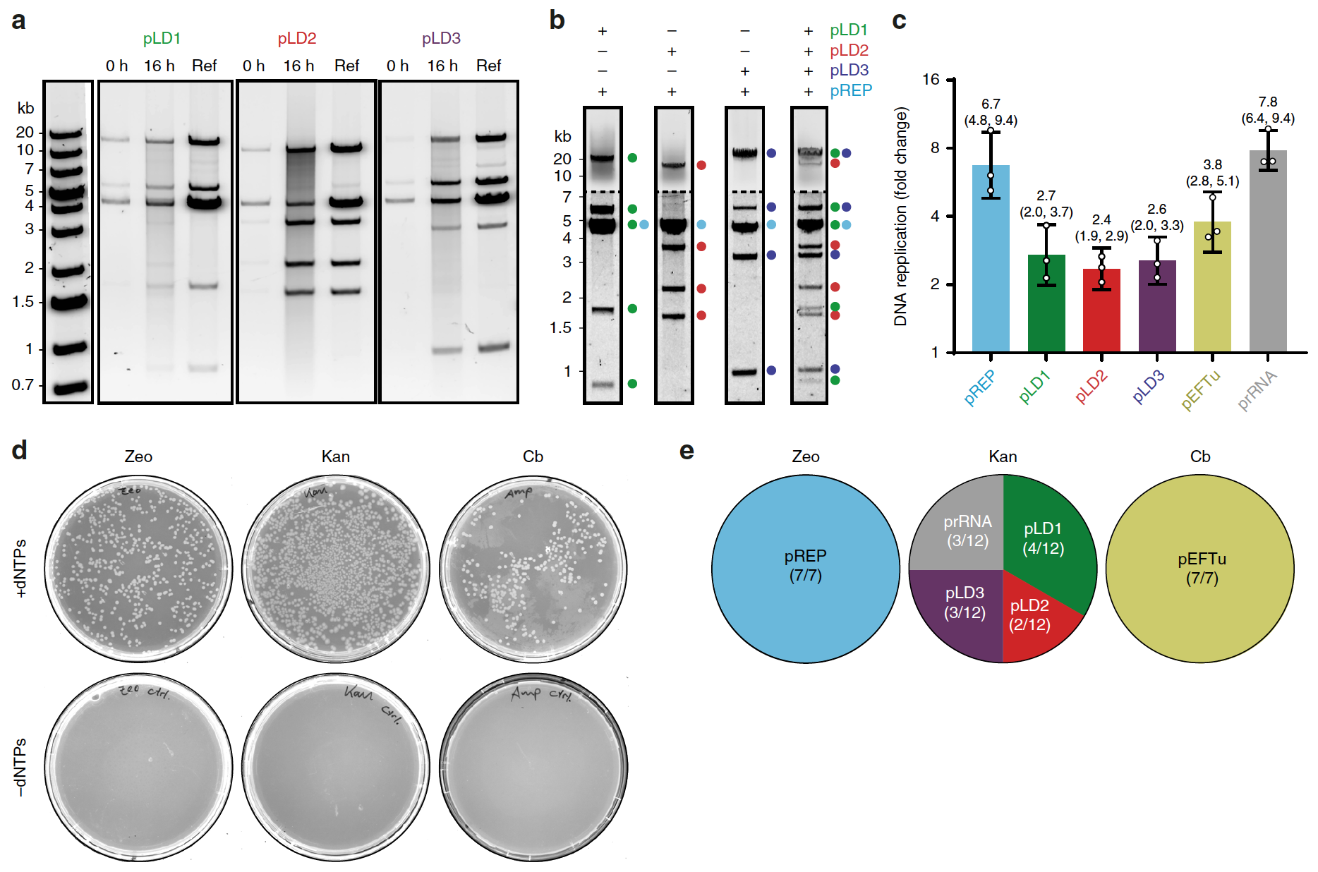 «Загляните, это нечто»: саморепликация искусственной ДНК - 3