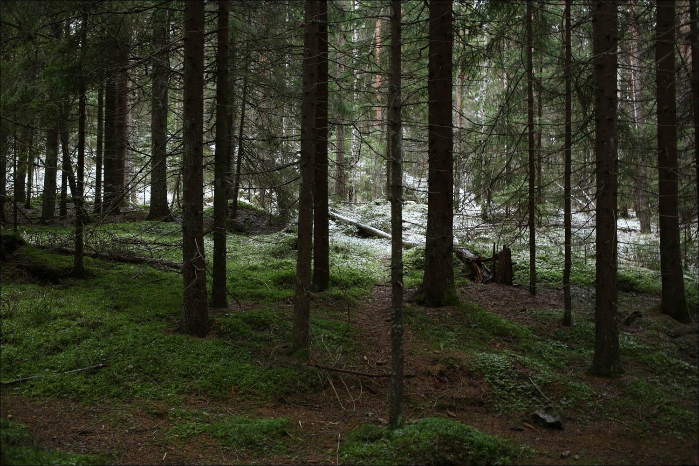 Хельсинки: город счастья и уюта - 39