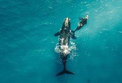 Посмотрите наудивительные снимки диких животных