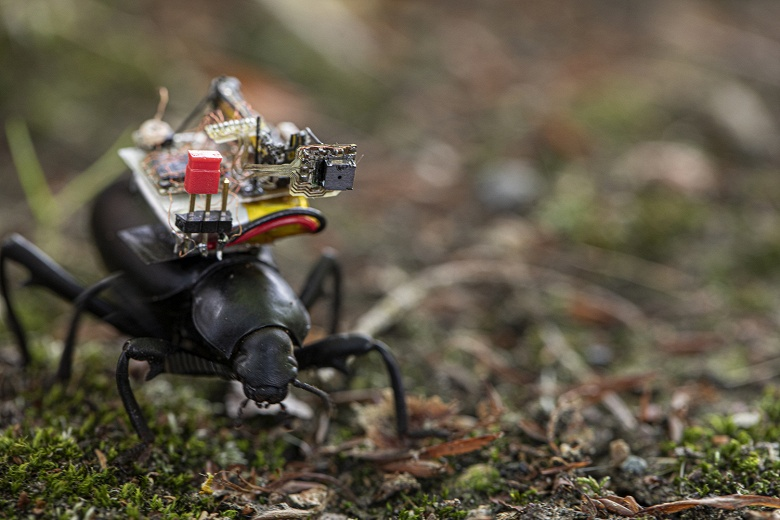 Американские исследователи создали крошечную беспроводную камеру, которую можно закрепить на насекомом