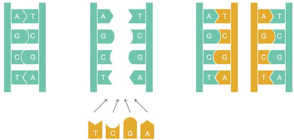 Алгоритмы в биоинформатике, онлайн курс
