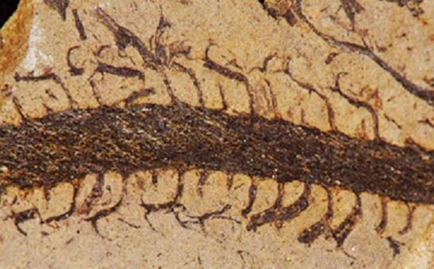 Аспирант из Беркли восстановил внешний вид растения, жившего 375 миллионов лет назад