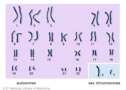 Деанонимизация через генетическую информацию