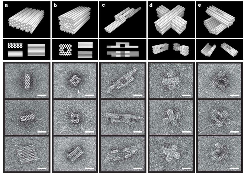 ДНК оригами: как из ДНК делают интересные штуки нанометрового размера