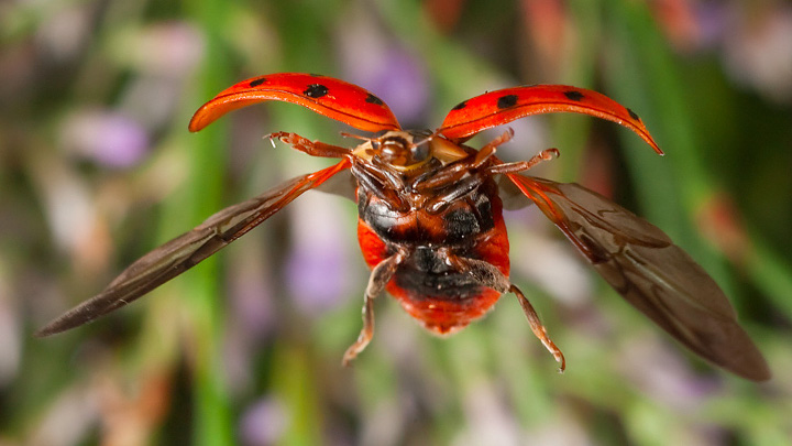 Фотографии насекомых в полёте, полученные с помощью старого HDD