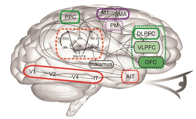 Функциональная компьютерная модель головного мозга