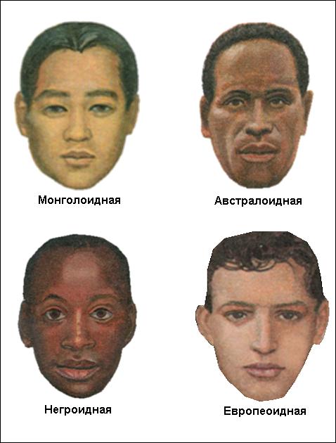 расы человека картинки