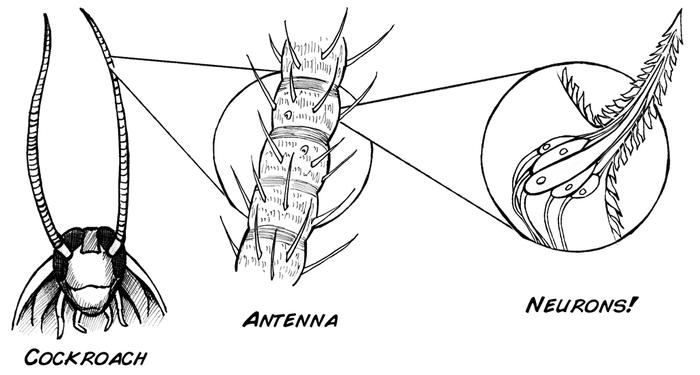 Как быстро сделать из таракана киборга