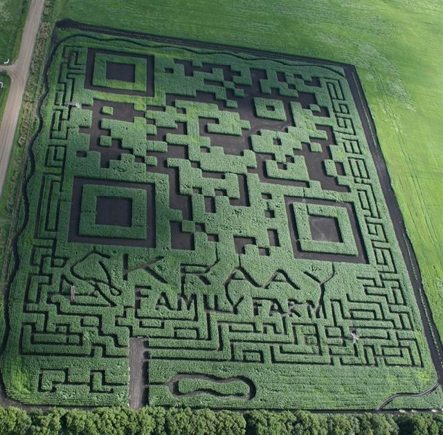 Канадские фермеры создали самый большой в мире QR код