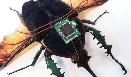 Могут ли насекомые быть запчастями?