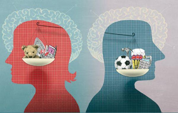 Половая дифференциация мозгов