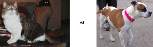 Про котиков, собак, машинное обучение и deep learning