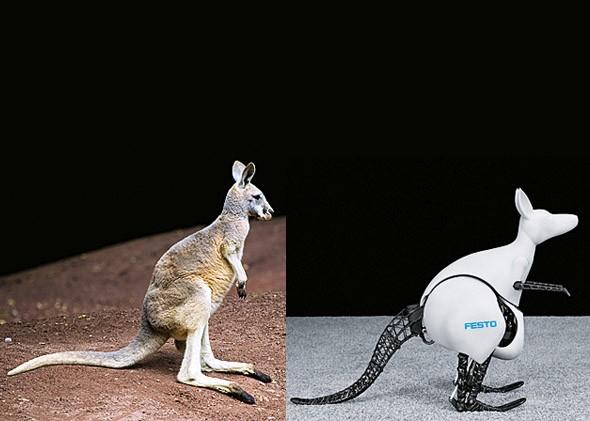 Разработчики компании Festo создали робота кенгуру (видео)