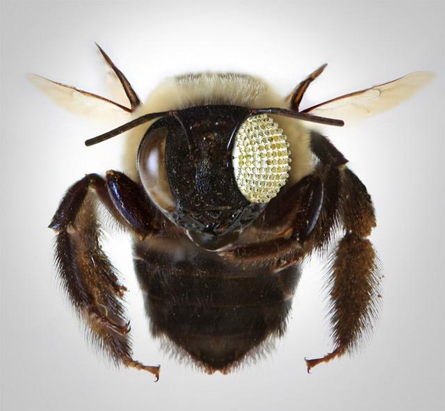 Широкоугольная линза с нулевыми искажениями сделана по образцу глаза насекомого