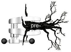 Сжатые префиксные деревья