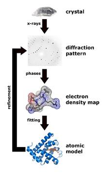Структура белка: введение для айтишников