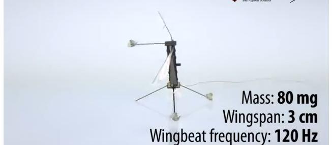 В Гарварде создали миниатюрного робота комара (+видео)