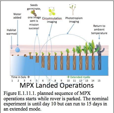Выращивание растений в грунте других планет — возможно ли это?